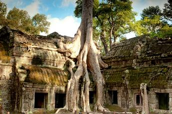 Cambodia Gay Cruise - Ta Prohm Cambodia
