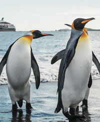 Antarctica Luxury Gay Cruise 2021