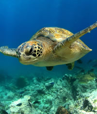 Galapagos Wildlife Adventure Gay Cruise & Tour