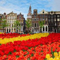 Tulips in Amsterdam - Netherlands All-Lesbian River Cruise 2016