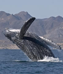 Whales & Sea of Cortez All-Lesbian Mexico Adventure Cruise