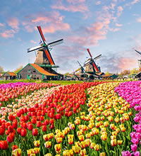 Blooms of Holland Gay Tour 2018