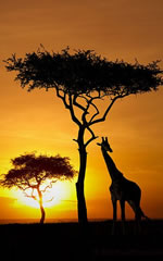 Kenya Luxury Safari Tour