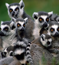 Lemur-Land - Madagascar Gay Tour
