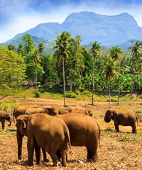 Sri Lanka Luxury Gay Tour