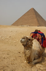 Gay Egypt tour