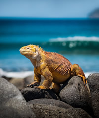 Galapagos gay tour