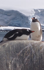 Gay Antarctica Adventure Cruise