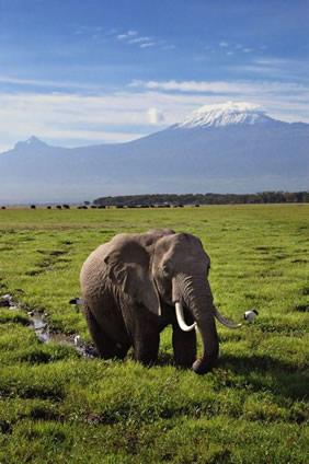 Tanzania Gay 56