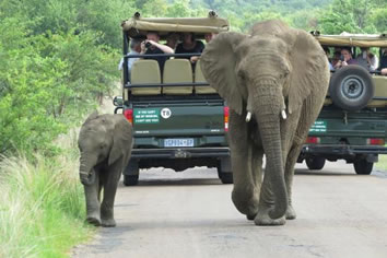 Gay Safari South Africa tour