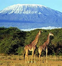 Kilimanjaro All-Gay Climb, Tanzania