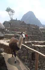 Peru, Amazon & Machu Picchu Gay Tour