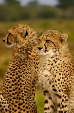 South Africa Lesbian Safari Tour