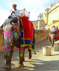 Rajasthan India Gay Group Tour