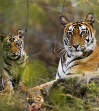 Wildlife of India Gay Tour