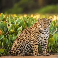 Pantanal - Brazil Wildlife Gay Safari Tour