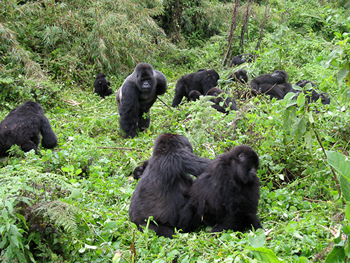 This is our Rwanda Gay Travel sectionhere
